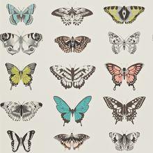Papilio 111077