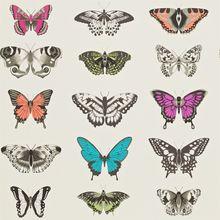 Papilio 111079